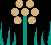 plantes_compagnes_colza